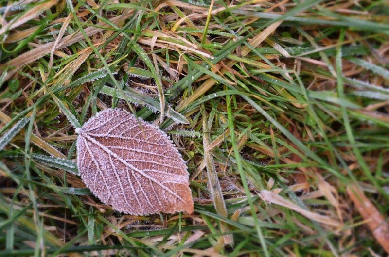 Лист упаденные осенью покрытые с изморозью стоковое изображение rf