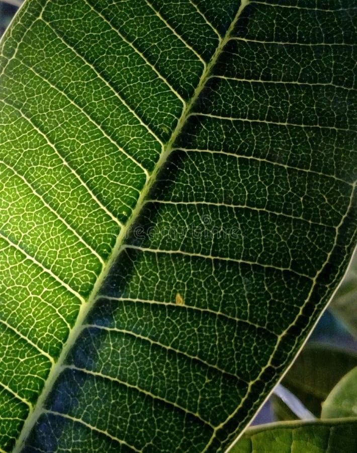 Фотоснимок макроса лист стоковое изображение