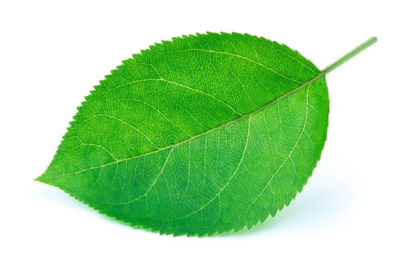 Лист Яблока изолированные на белизне стоковые изображения