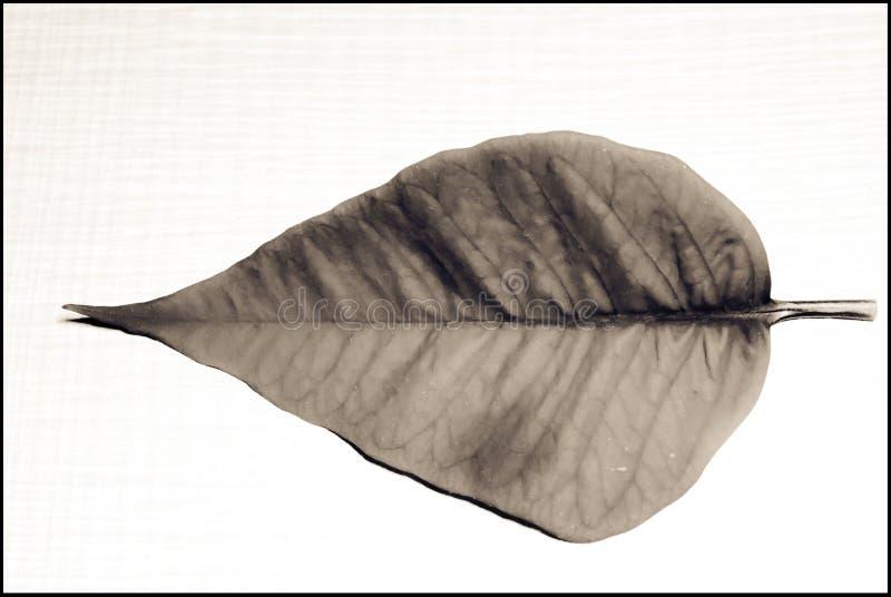 Лист стоковое фото