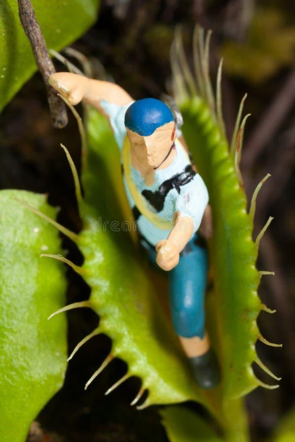 Лист flytrap Венеры есть миниатюру стоковое изображение rf
