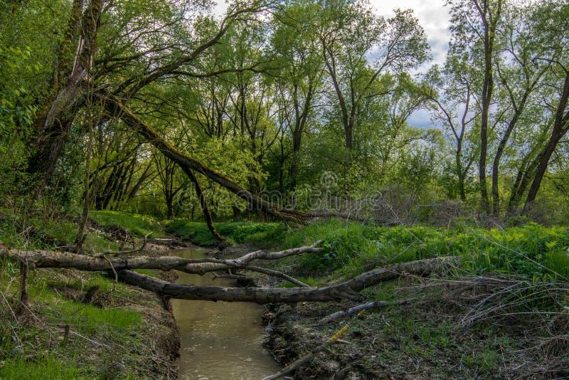 Литовские джунгли стоковое изображение rf