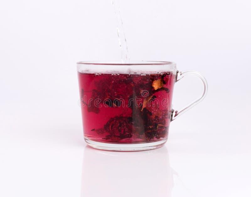 Лить горячая вода к стеклянной чашке с чаем гибискуса, изолированным на белизне стоковое изображение