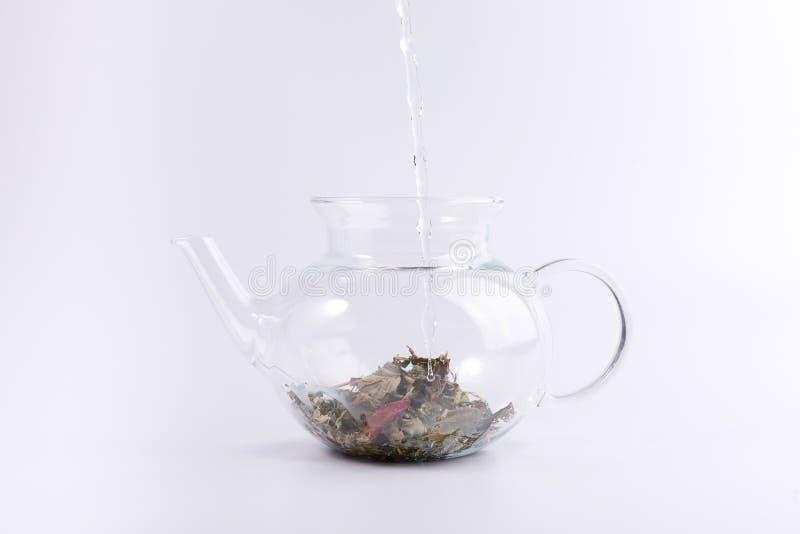 Лить горячая вода к стеклянному чайнику с травяным чаем, изолированным на белизне стоковая фотография rf