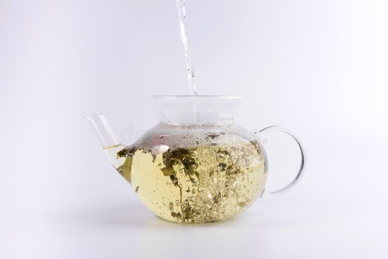 Лить горячая вода к стеклянному чайнику с травяным чаем, изолированным на белизне стоковое изображение rf