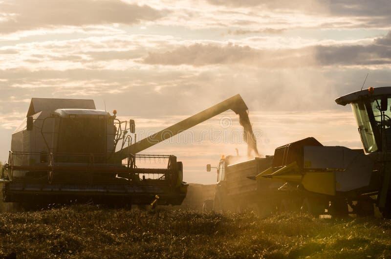 Лить зерно пшеницы в трактор стоковое фото rf