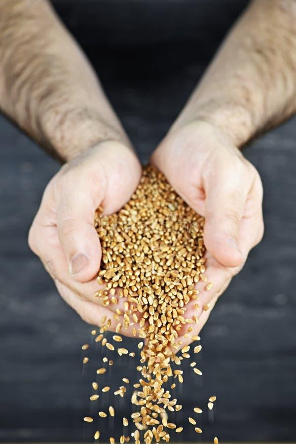 лить рук зерна стоковая фотография rf