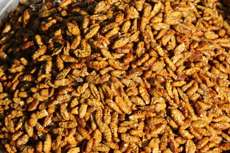 Личинка для еды стоковое изображение