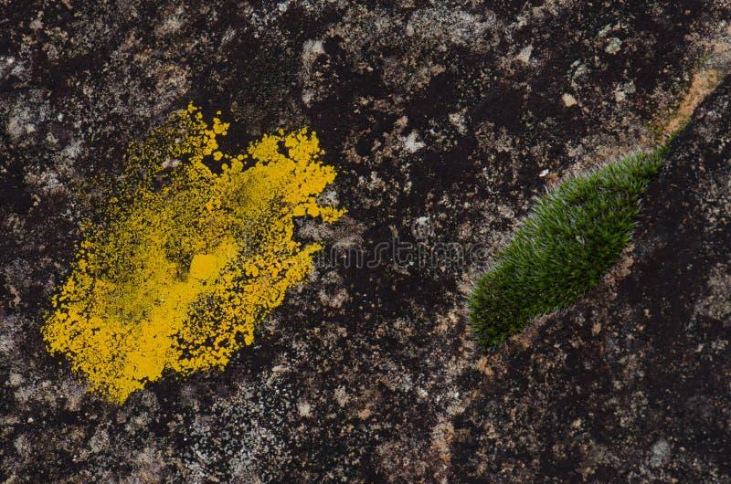 Лишайник и мох стоковое фото