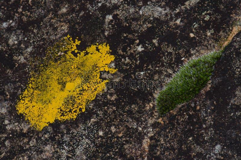 Лишайник и мох стоковое фото rf
