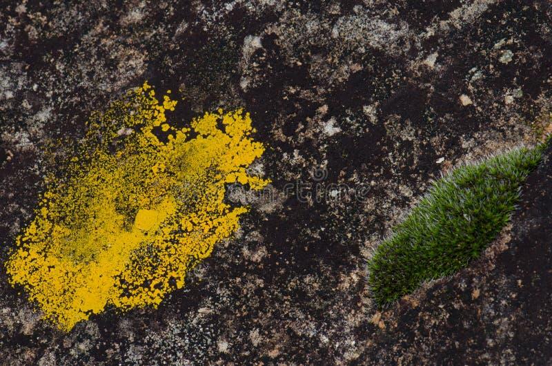 Лишайник и мох стоковая фотография rf