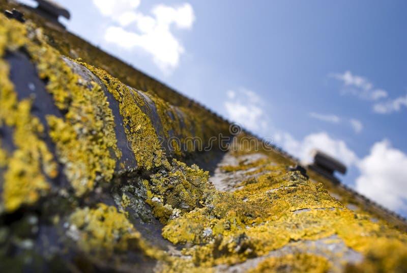 Лишайник и мох стоковые фото