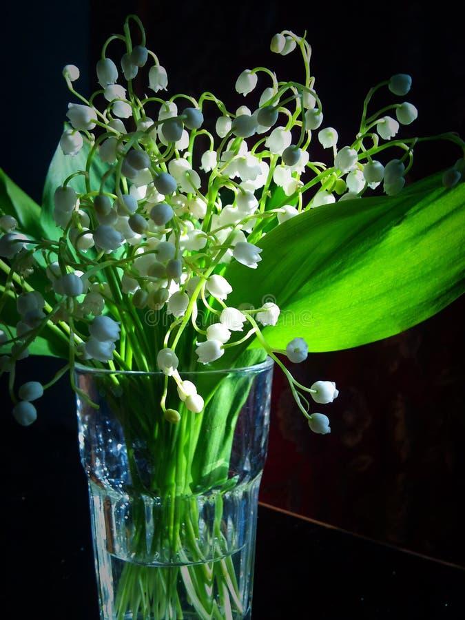 Лилии долины стоковые фотографии rf