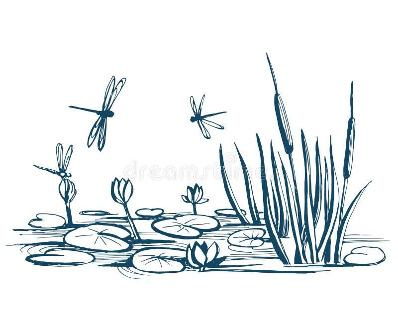 Лилия и тростники воды на пруде иллюстрация вектора