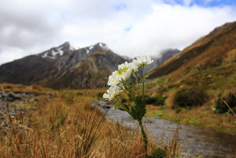 Лилия кашевара держателя, национальный парк пропуска Артура стоковое изображение