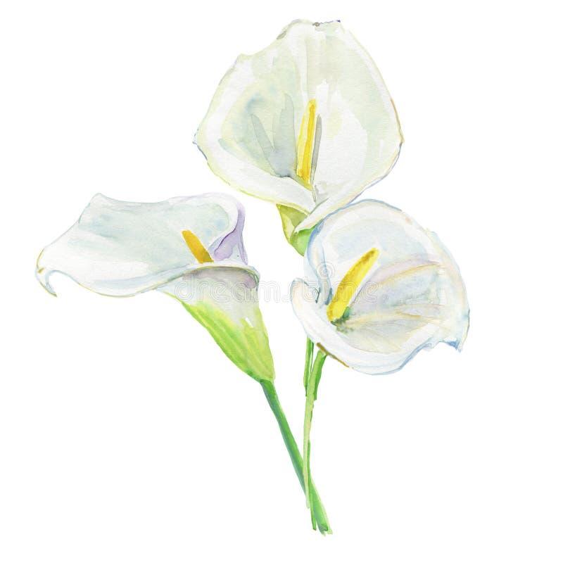 Лилия Calla букета Для wedding приглашений и карточек праздника акварель бесплатная иллюстрация