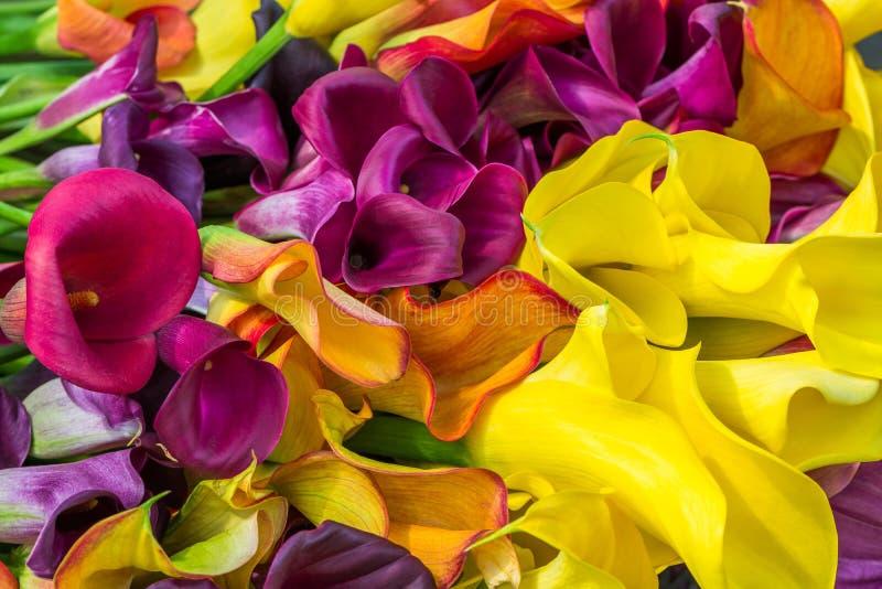 Лилия Calla стоковое изображение rf