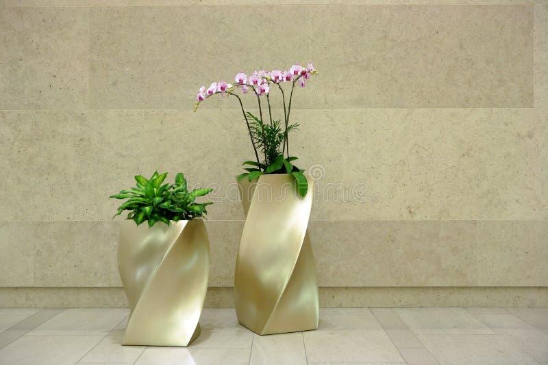 лобби цветка стоковые фото