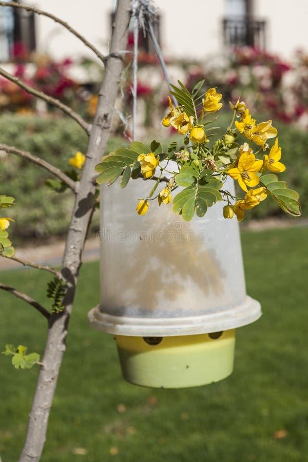 Ловушка для мух и малярийных москитов на дереве в Африке стоковая фотография