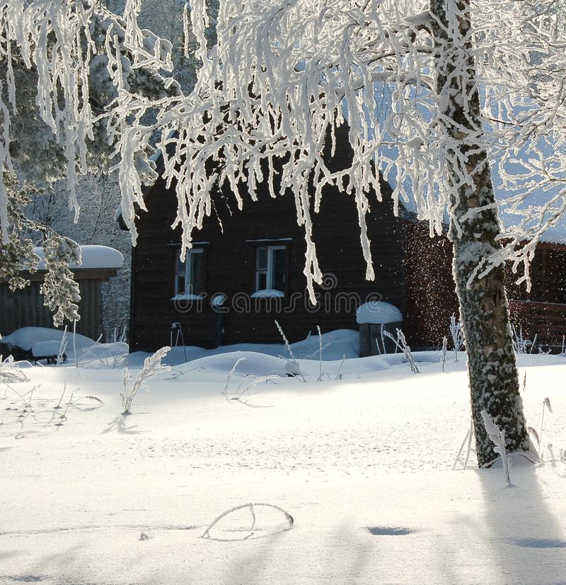 Ложа Snowy в лесе зимы стоковые фотографии rf