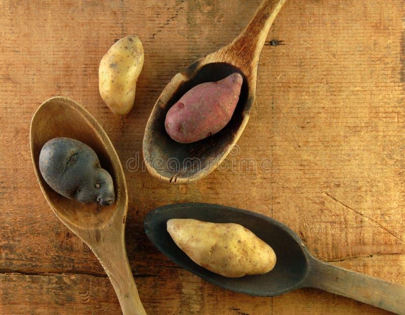 ложки картошек fingerling деревянные стоковая фотография rf