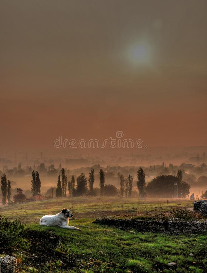 Ложь собаки на траве под восходом солнца стоковое изображение