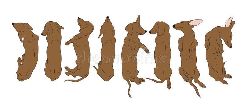 Лож собаки, коричневый цвет таксы, вектор иллюстрация штока