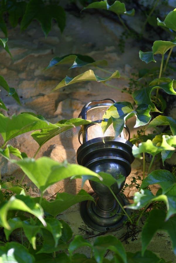Лоза и фонарик в Провансали стоковое фото