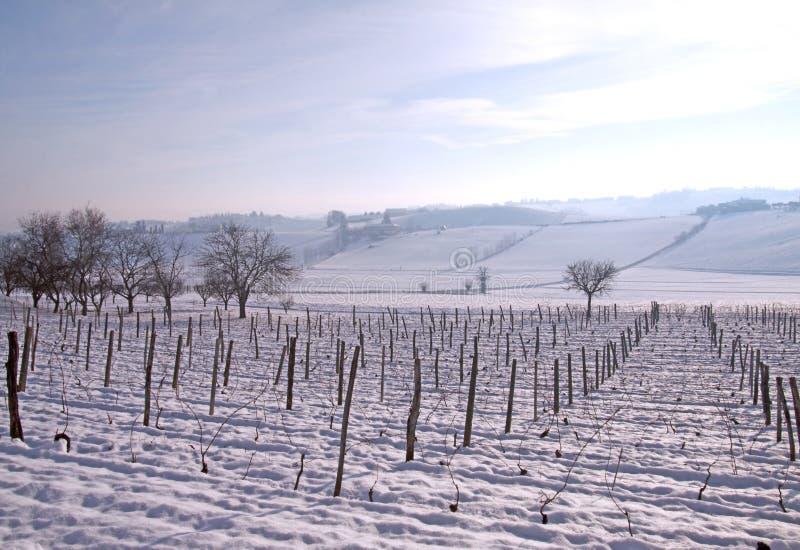 лоза снежка стоковое фото rf