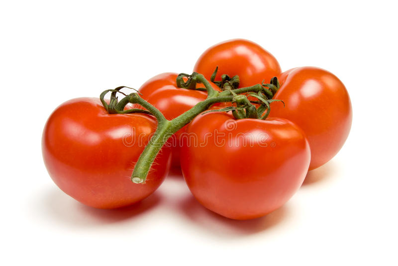 лоза томата стоковые изображения rf