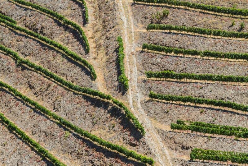 Лозы вина сверху стоковое изображение rf