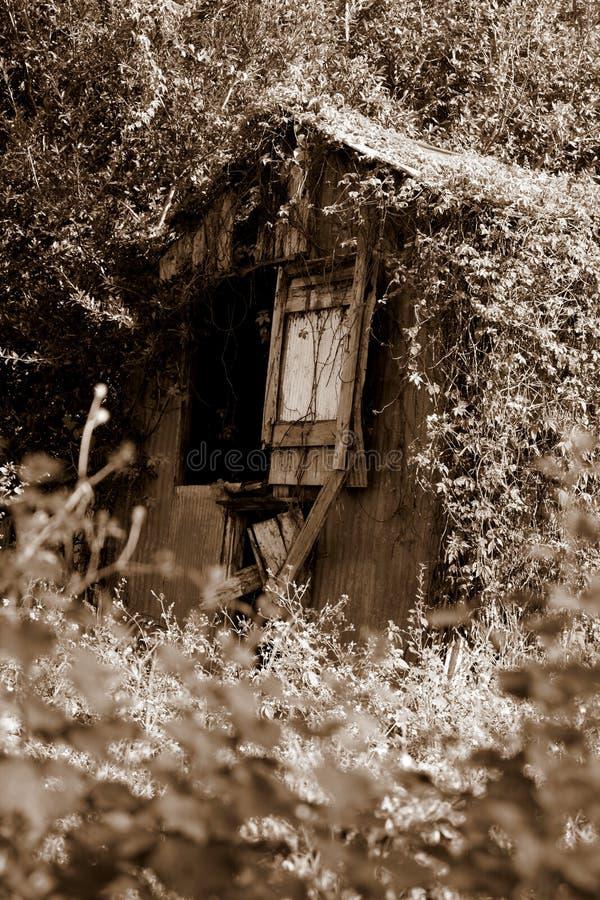 Лозы покрывая старый амбар стоковая фотография
