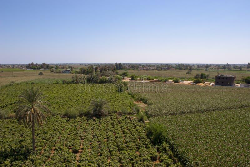 лозы села стоковое изображение