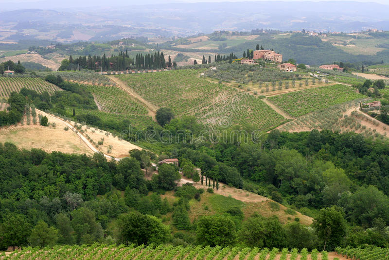 лозы Тосканы ландшафта fileds стоковое фото