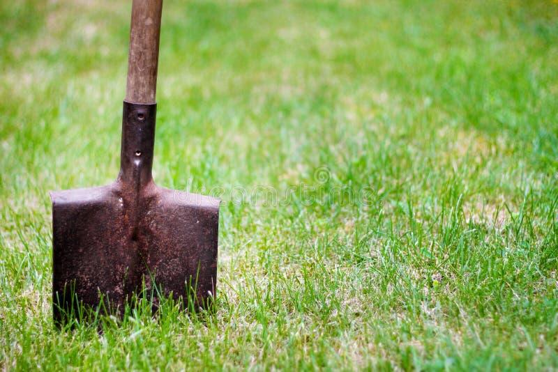 Лопаткоулавливатель в зеленой траве стоковое фото rf