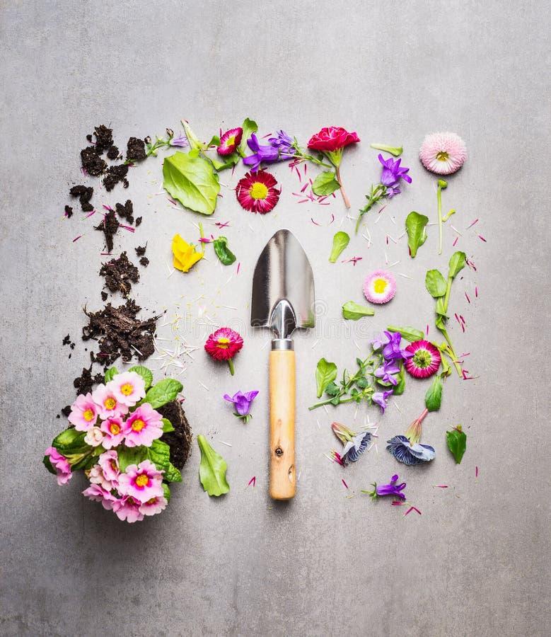 Лопаткоулавливатель руки и завод цветков с листьями и лепестками на серой каменной предпосылке, составлять взгляд сверху стоковое изображение rf