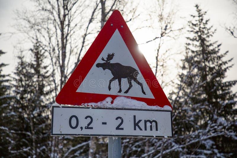 Лоси дорожного знака стоковое изображение