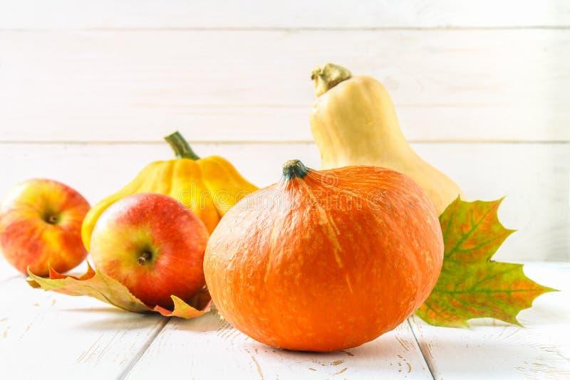 Лоток тыквы и пирожка, яблоки и клен, листья желтого цвета дуба на белом деревянном столе Сбор осени стоковые изображения rf