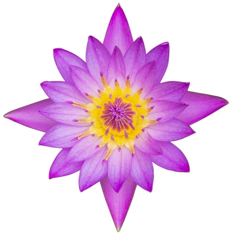 лотос взгляда сверху пурпурный изолированный на белой предпосылке с путем клиппирования стоковое изображение