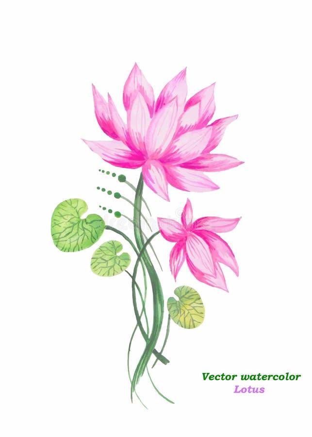 Лотос пинка иллюстрации акварели вектор вектор детального чертежа предпосылки флористический бесплатная иллюстрация