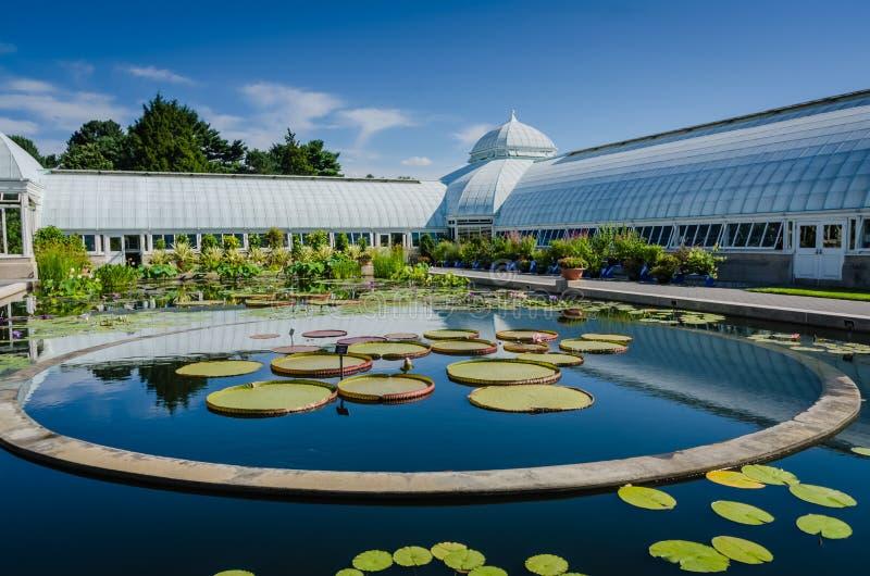 Лотос покидает - консерватория Haupt - сад Нью-Йорка ботанический - стоковые фотографии rf