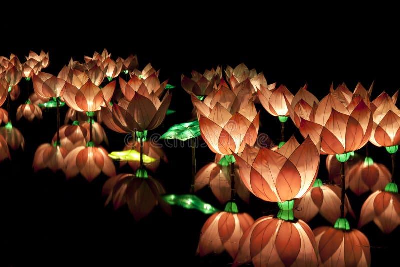 лотос фонарика стоковые фото