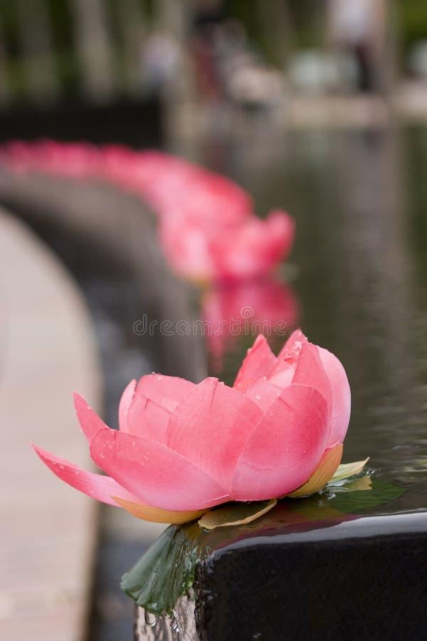 Download лотос цветка стоковое фото. изображение насчитывающей бассеин - 478274