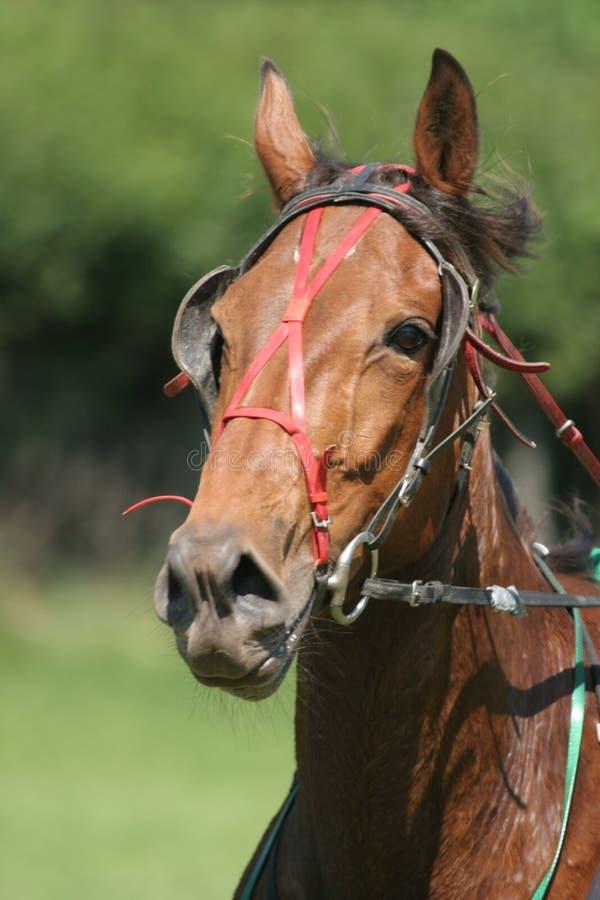 лошадиные скачки Стоковая Фотография RF