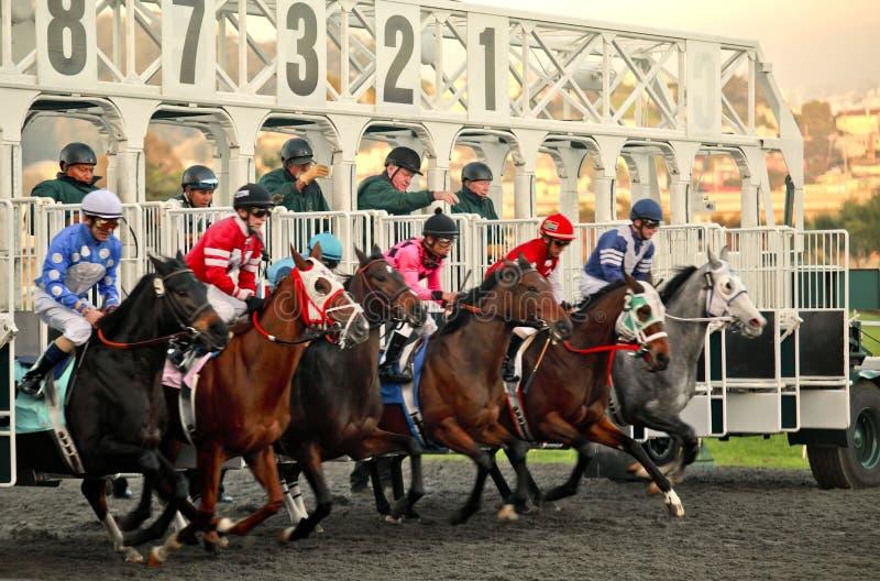 лошадиные скачки стоковая фотография