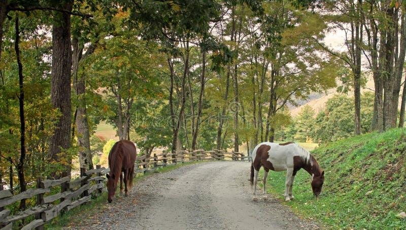 Download лошади в дороге стоковое фото. изображение насчитывающей природа - 6853058