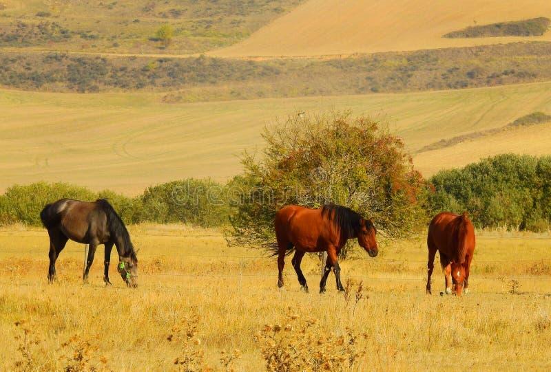 Лошади в лете стоковые фотографии rf
