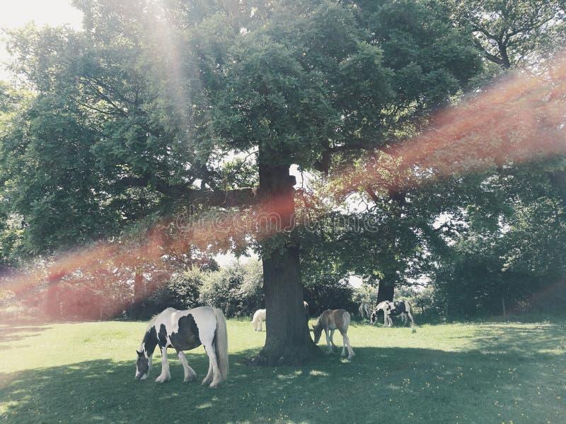 Лошади в природе стоковые изображения