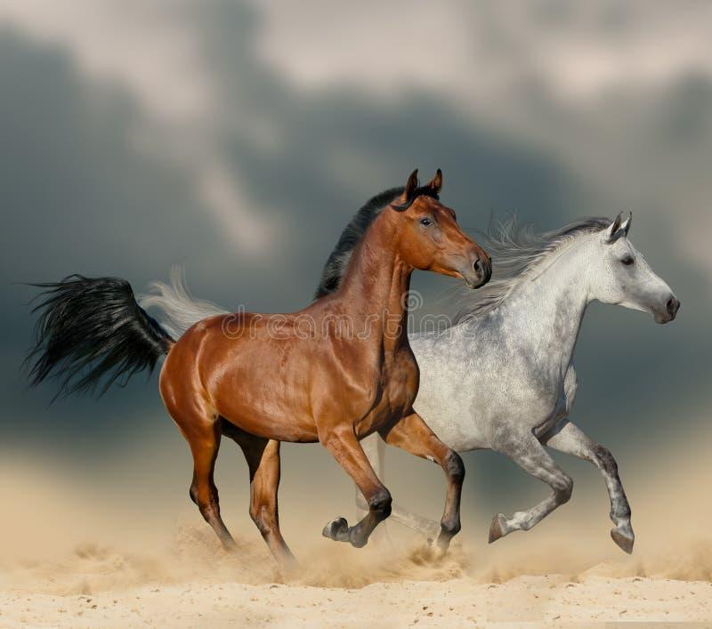 Лошади в пустыне стоковые фото