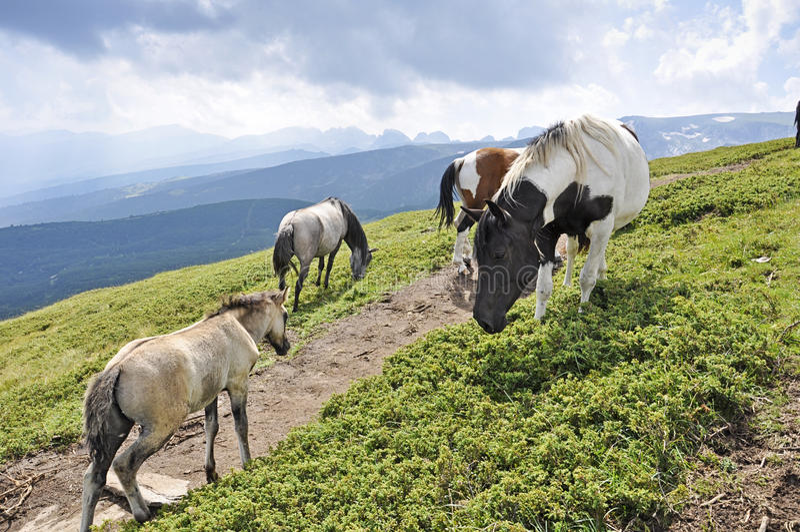 Лошади в Rila стоковые изображения rf